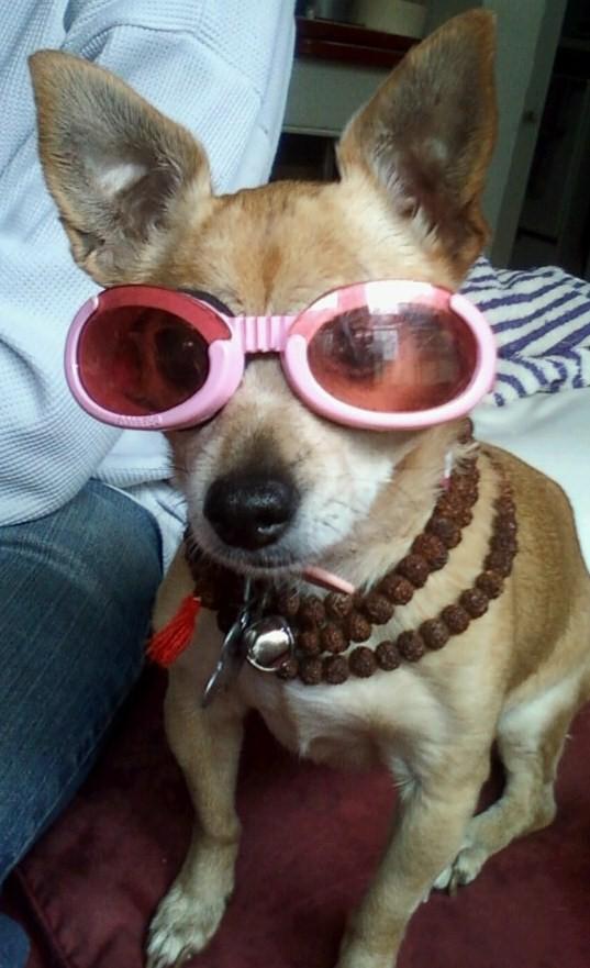 Dumplin' - Doggles